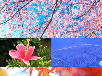 日本の四季 Japan's four seasons