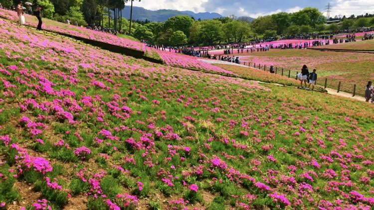 埼玉の観光・デート・写真スポット